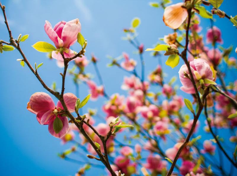 espaco-caminho-de-ascensao-como-uma-flor