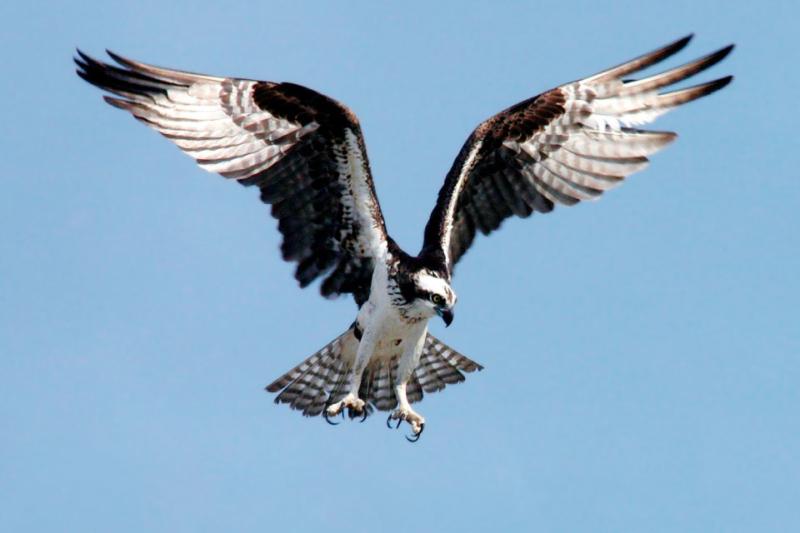 espaco-caminho-de-ascensao-olhos-de-aguia